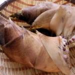 たけのこの皮の利用法 懐かしい梅干しの食べ方と簡単なむき方
